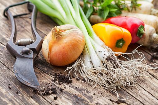Scallion「vegetable harvest freshness from garden」:スマホ壁紙(13)
