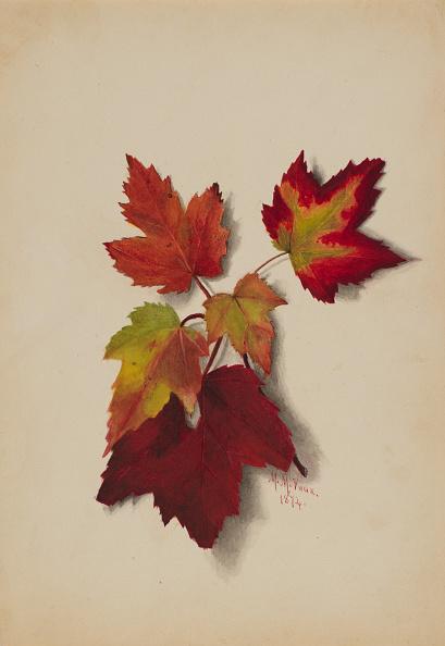 かえでの葉「Untitled (Autumn Leaves)」:写真・画像(6)[壁紙.com]