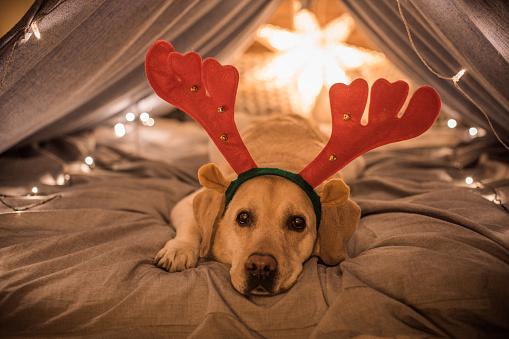 Entertainment Tent「Christmas Eve napping」:スマホ壁紙(18)
