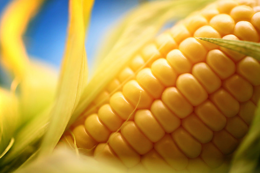 Corn「Corn on the cob, closeup.」:スマホ壁紙(12)