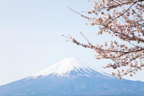 桜「桜、富士山&」:スマホ壁紙(8)