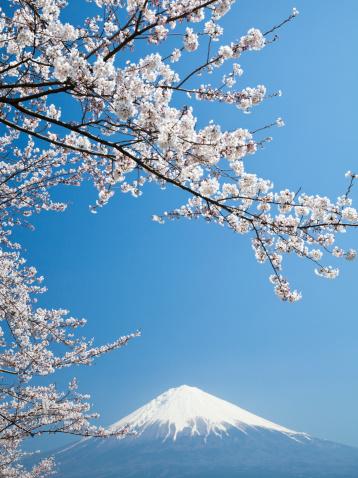 富士山「桜、富士山&」:スマホ壁紙(6)
