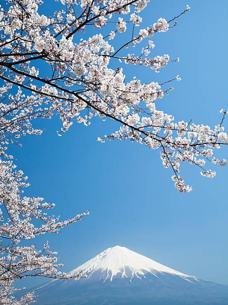 桜、富士山&:スマホ壁紙(壁紙.com)