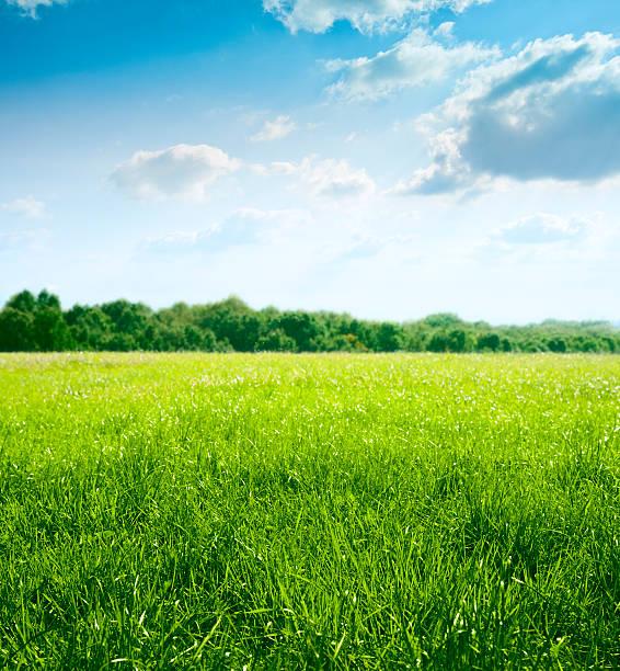 春の草地:スマホ壁紙(壁紙.com)
