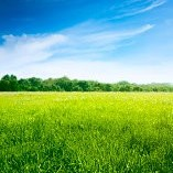 緑壁紙の画像(壁紙.com)