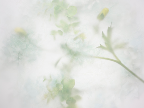 Floral Pattern「Abstract background of the flower」:スマホ壁紙(19)