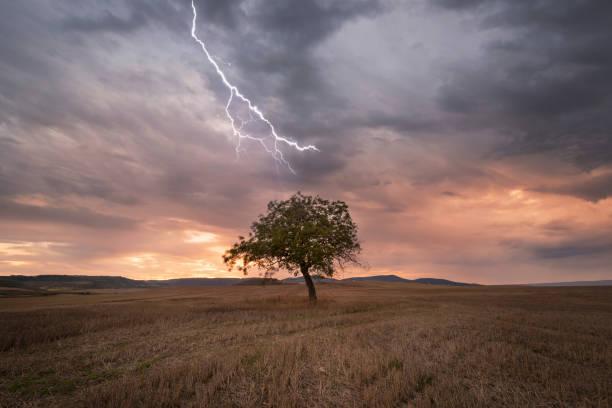Lightning over lonely tree at scenic sunset:スマホ壁紙(壁紙.com)