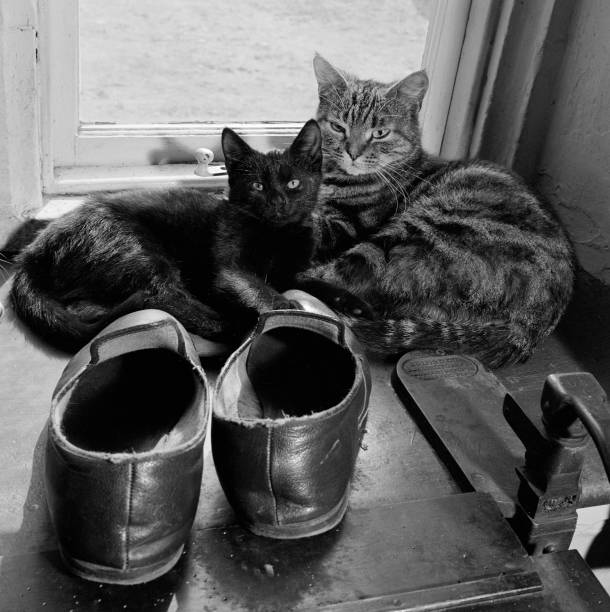 Two Cats Beside A Pair Of Slippers On The Window Sill Of A House In Lacock:ニュース(壁紙.com)