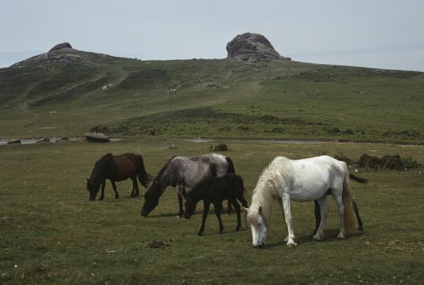 Travel Destinations「Hay Tor Horses」:写真・画像(15)[壁紙.com]