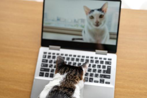 Cat「Cats having video call」:スマホ壁紙(0)