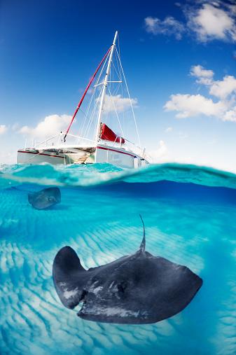 ケイマン諸島「表面の下」:スマホ壁紙(10)