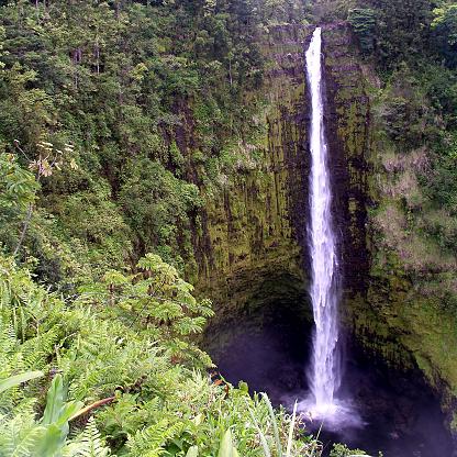 Akaka Falls「Akaka Falls Waterfall in Tropical Forest」:スマホ壁紙(8)