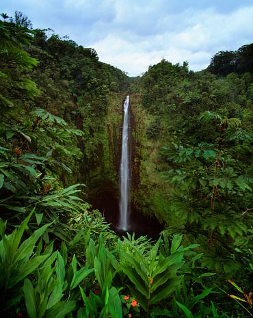 Akaka Falls「Akaka Falls」:スマホ壁紙(13)