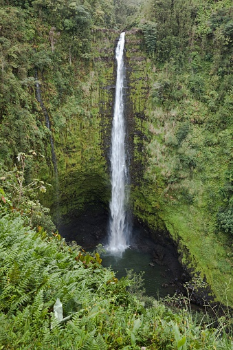 Akaka Falls「Akaka Falls With Cliffs And A Gorge Covered With Rainforest Plants」:スマホ壁紙(15)