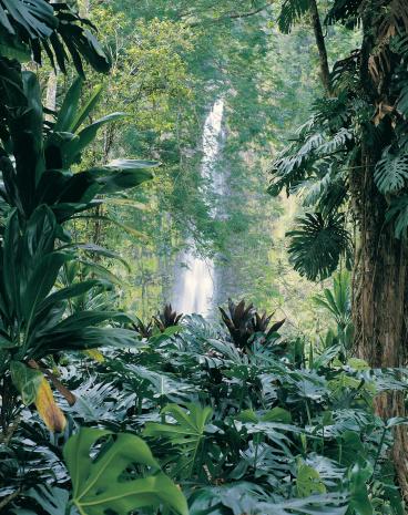 Tropical Rainforest「Akaka Falls State Park, Hawaii, Hawaiian Islands」:スマホ壁紙(17)