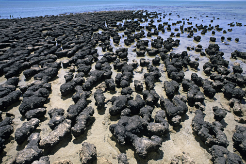 Shallow「Stromatolites formed by cyanobacteria, oldest lifeforms in world, Shark Bay, western Australia」:スマホ壁紙(6)