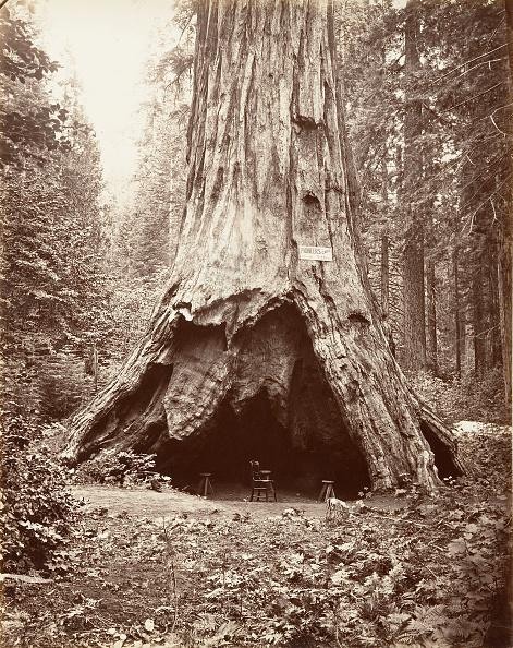 Grove「Pioneers Cabin」:写真・画像(10)[壁紙.com]