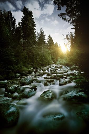 Cascade Range「Stream in a forest」:スマホ壁紙(15)