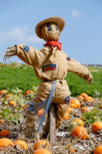 Farm「Scarecrow in pumpkin patch」:スマホ壁紙(18)