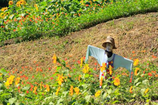 Japan「Scarecrow in Garden」:スマホ壁紙(8)