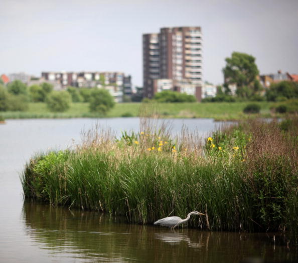 Environmental Conservation「The London Wetland Centre Celebrate Their 10th Anniversary」:写真・画像(13)[壁紙.com]