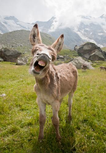 Ass「donkey braying」:スマホ壁紙(10)
