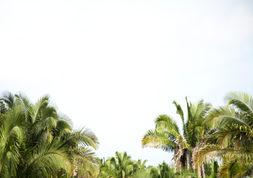 Sayulita「Mexico, Nayarit, Sayulita, palm trees」:スマホ壁紙(1)