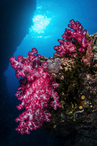 Unrecognizable Person「Soft coral on a wall in Kadavu Island, Fiji.」:スマホ壁紙(9)