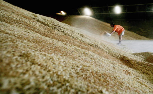 Wheat「Australian Wheat Prepared For Export」:写真・画像(9)[壁紙.com]