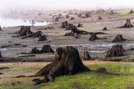 Lumber Industry「Logging Clearcut」:スマホ壁紙(17)