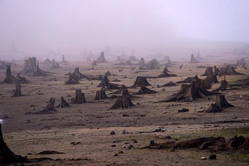 Deforestation「Logging Clearcut」:スマホ壁紙(9)