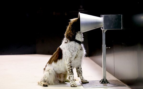 Infectious Disease「Adelaide Researchers Train Sniffer Dogs To Detect People Infected With COVID-19」:写真・画像(15)[壁紙.com]