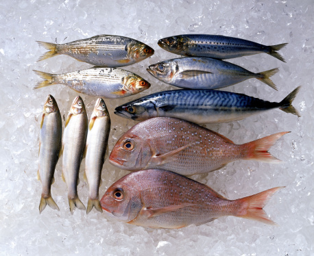 Sea Bream「Assortment of fish on ice」:スマホ壁紙(14)