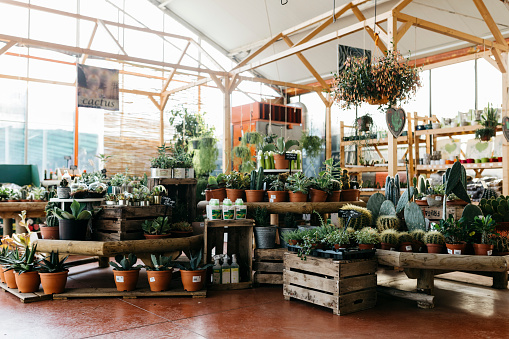 Plant Nursery「Assortment of cacti in a garden center」:スマホ壁紙(0)