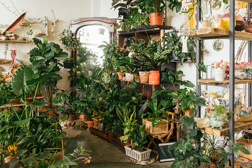 Plant Nursery「Assortment of plants in a showroom」:スマホ壁紙(7)