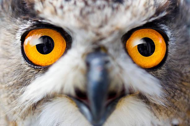 Detail eyes of eagle owl:スマホ壁紙(壁紙.com)