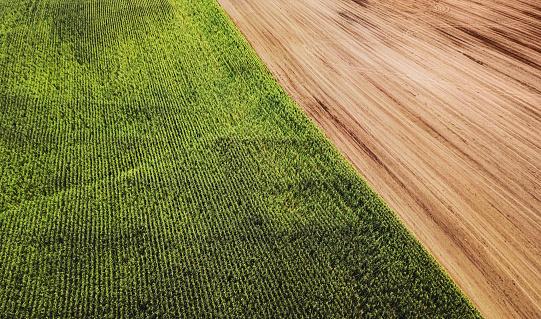 Specimen Holder「Aerial Drone View: Corn Field」:スマホ壁紙(5)
