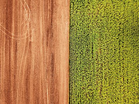 Specimen Holder「Aerial Drone View: Corn Field」:スマホ壁紙(10)