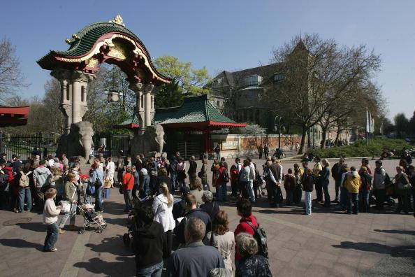 Visit「Knut Mania Continues」:写真・画像(1)[壁紙.com]