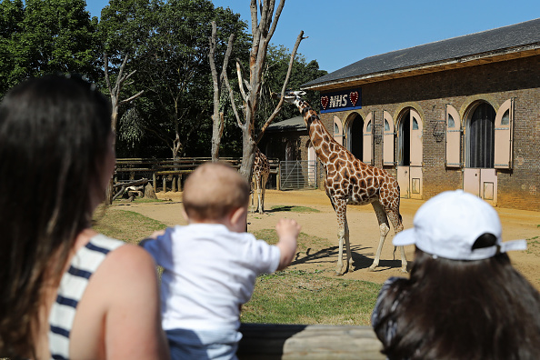 Paying「UK Zoos Reopen To Visitors As Coronavirus Lockdown Eases Further」:写真・画像(0)[壁紙.com]