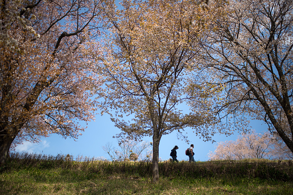 奈良県「People Enjoy Cherry Blossoms In Japan」:写真・画像(18)[壁紙.com]