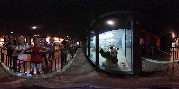 動物の世界「Smithsonian Zoo's Baby Panda Bei Bei Turns One」:写真・画像(18)[壁紙.com]