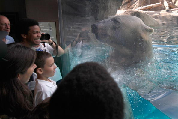 Wilderness Area「Animals At In The Brookfield Zoo Try To Beat The Summer Heat」:写真・画像(13)[壁紙.com]