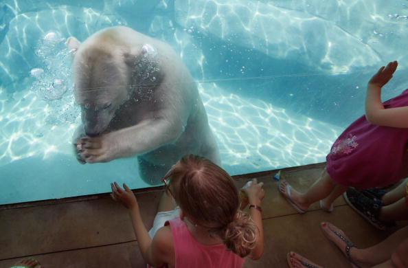 Wilderness Area「Animals At In The Brookfield Zoo Try To Beat The Summer Heat」:写真・画像(8)[壁紙.com]