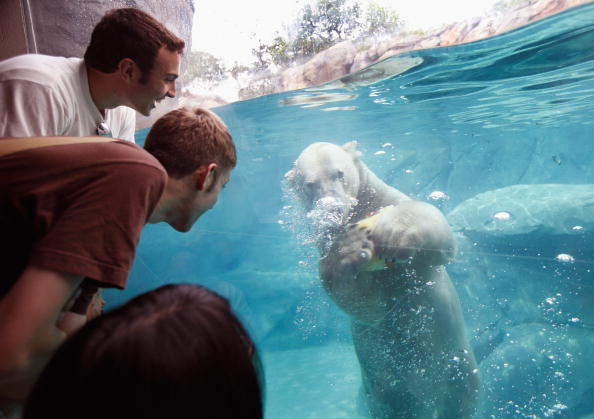 Wilderness Area「Animals At In The Brookfield Zoo Try To Beat The Summer Heat」:写真・画像(12)[壁紙.com]