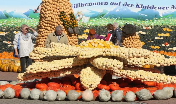 Edelweiss - Flower「October Is Pumpkin Season」:写真・画像(19)[壁紙.com]