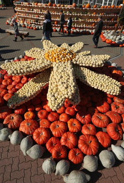 Edelweiss - Flower「October Is Pumpkin Season」:写真・画像(18)[壁紙.com]