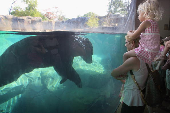 Wilderness Area「Animals At In The Brookfield Zoo Try To Beat The Summer Heat」:写真・画像(2)[壁紙.com]