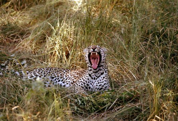 Animals Hunting「Kruger National Park」:写真・画像(19)[壁紙.com]