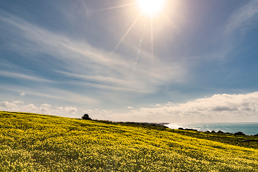 Wood Sorrel「Italy, Sicily, Coast, blooming plants, bermuda buttercup」:スマホ壁紙(7)
